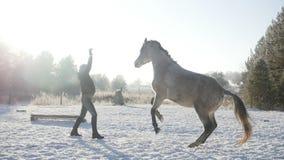 Donna che gioca con un cavallo stock footage