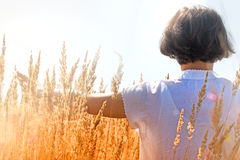 Donna che gode nell'alta erba Immagine Stock Libera da Diritti