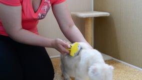 Donna che graffia la pelliccia sul gatto facendo uso di Furminators video d archivio