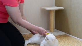 Donna che graffia la pelliccia sul gatto facendo uso di Furminators archivi video