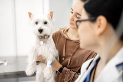 Donna che indossa orologio astuto che mostra il suo cane bianco sveglio fotografia stock