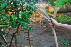 Donna che innaffia le piante fotografia stock