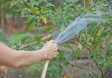 Donna che innaffia le piante immagine stock libera da diritti