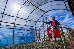 Donna che innaffia le verdure organiche in serra nella toppa di verdure Immagini Stock Libere da Diritti