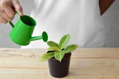 Donna che innaffia una pianta Immagini Stock Libere da Diritti