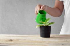 Donna che innaffia una pianta Immagine Stock