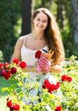 Donna che lavora nelle piante delle rose immagini stock libere da diritti