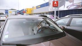 Donna che legge il catalogo di IKEA dentro parcheggio dell'automobile stock footage