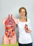 Donna che mostra il modello ed il torso del cuore fotografia stock libera da diritti