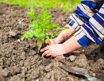 Donna che pianta plantula nel suolo Raggiro di ecologia e della primavera Fotografia Stock