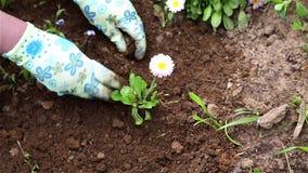 Donna che pianta un fiore su un letto video d archivio