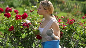 Donna che prende cura dei cespugli di rosa rossa archivi video