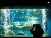 Donna che prende una foto del pesce fotografia stock libera da diritti