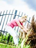 Donna che rimuove l'albero secco del thuja dal cortile Fotografie Stock