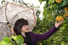Donna che seleziona un arancio Fotografie Stock