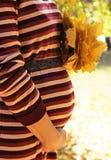 Donna che si tiene per mano con le foglie di acero sulla sua pancia incinta Fotografia Stock