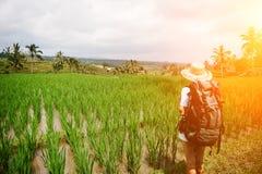 Donna che sta fra le risaie con lo zaino ed il cappello e che guarda lontano Immagine Stock Libera da Diritti