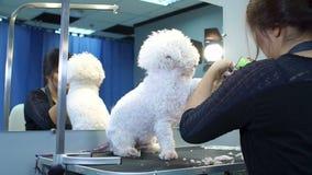 Donna che taglia peli dalle zampe di un cane bianco lanuginoso da un tagliatore meccanico video d archivio