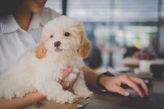 Donna che tiene cane adorabile al ristorante del caffè adolescente femminile s Fotografie Stock