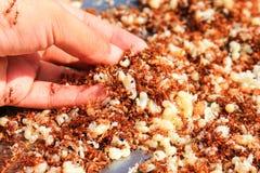 Donna che tiene formica ed uovo rossi, alimento tailandese Immagine Stock Libera da Diritti