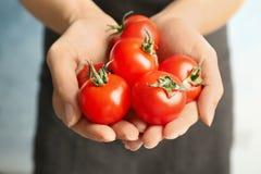 Donna che tiene i pomodori maturi in mani Immagine Stock