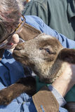 Donna che tiene un agnello amichevole Immagine Stock