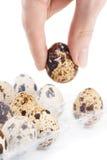 Donna che tiene un uovo di quaglie Fotografia Stock