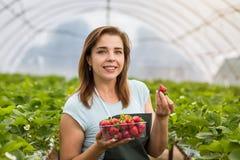 Donna che tiene una fragola pungente succosa nella macchina fotografica, strawber Fotografia Stock Libera da Diritti
