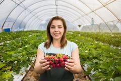 Donna che tiene una fragola pungente succosa nella macchina fotografica, strawber Immagine Stock Libera da Diritti