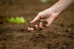 Donna che tiene una manciata di suolo fertile ricco Immagini Stock Libere da Diritti