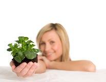 Donna che tiene una pianta in sua mano immagini stock