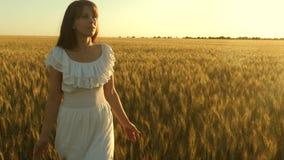 Donna che viaggia attraverso un campo con grano dorato contro il cielo Frumento organico Una bella ragazza cammina attraverso un  video d archivio