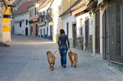 Donna con i cani su una camminata Immagini Stock Libere da Diritti