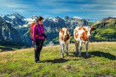 Donna con i giovani calfs in montagne, Grindelwald, Svizzera, Europa della viandante Immagini Stock