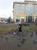 Donna con i piccioni Fotografie Stock Libere da Diritti
