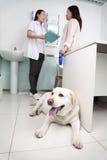 Donna con il cane di animale domestico nell'ufficio del veterinario, discutente fotografie stock libere da diritti