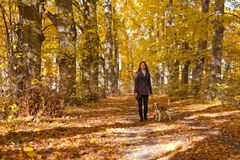 Donna con il cane nella sosta di autunno immagine stock