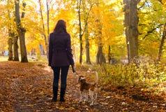 Donna con il cane nella sosta di autunno fotografia stock libera da diritti