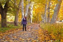 Donna con il cane nella sosta di autunno immagini stock libere da diritti