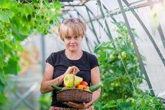 Donna con il canestro di pianta e delle verdure nella serra Tempo di raccogliere Fotografia Stock Libera da Diritti