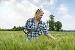 Donna con il computer della compressa che ispeziona la pianta del grano nel campo enorme Immagini Stock Libere da Diritti