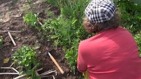 Donna con il lavoro del cappello in giardino Fragola dell'erbaccia Tenuto in mano video d archivio