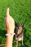 Donna con il suo cane nel parco Fotografia Stock Libera da Diritti