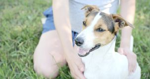 Donna con il suo cane sull'erba video d archivio