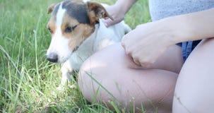 Donna con il suo cane sull'erba stock footage