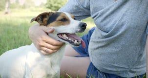 Donna con il suo cane sull'erba archivi video