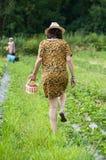 Donna con il vestito da estate, il cappello e gli straberries di legno di raccolto del canestro in un campo Fotografia Stock