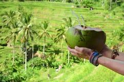 donna con la noce di cocco nel terrazzo Bali Indonesia del riso di Tegalalang Fotografie Stock Libere da Diritti