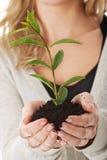 Donna con la pianta e la sporcizia a disposizione Fotografie Stock