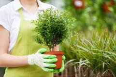 Donna con la pianta in vaso. Immagini Stock Libere da Diritti
